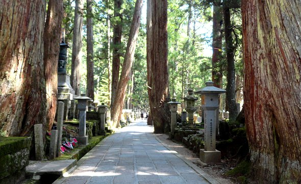Walking Inside Okunoin Cemetery, Koyasan, Japan