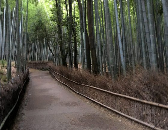 Alone in the Bamboo Grove, Arashiyama Forest, Arashiyama, West Kyoto, Japan