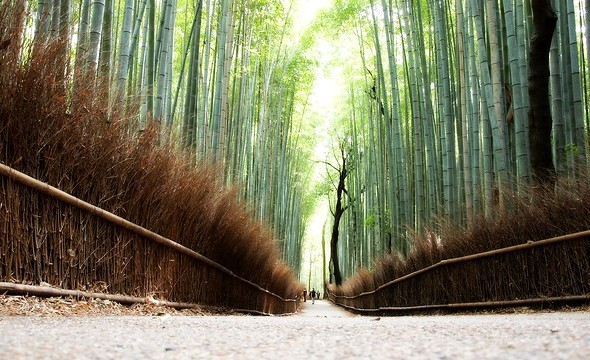 Bamboo Forest, Arashiyama, West Kyoto, Japan