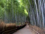 Guida a Come Raggiungere e Visitare la Foresta di Bambù di Arashiyama a Kyoto