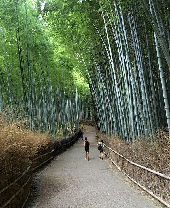 Walking in the Bamboo Groves, Arashiyama Forest, Arashiyama, West Kyoto, Japan