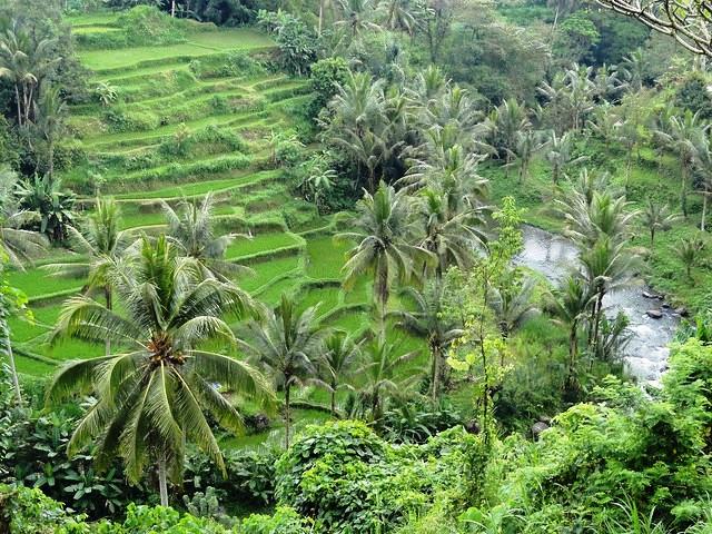Guida a Cosa Fare e Cosa Visitare ad Ubud a Bali: le Attrazioni Più Belle di Ubud