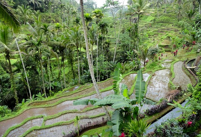 View of Tegalalang Rice Terrace from the Restaurant at the end of Cycle Tour, Bali, Indonesia