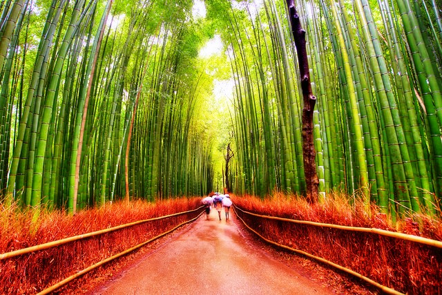 Bamboo Grove of Arashiyama, Kyoto, Japan