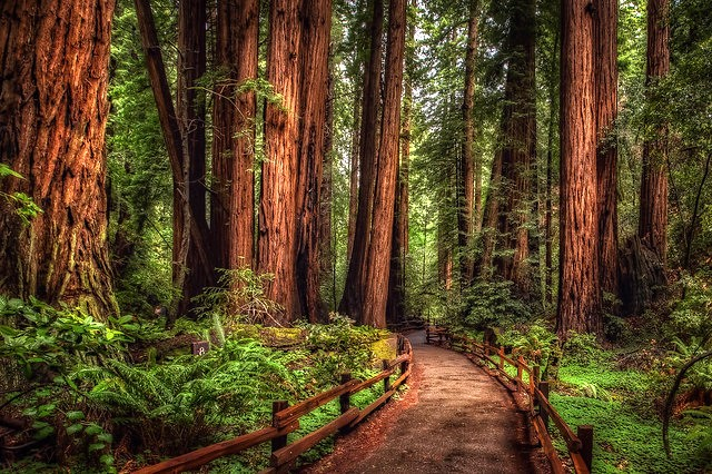 Muir Woods National Monument, San Francisco, California, United States