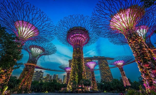 Supertree Grove with Marina Bay Sands in Background, Gardens by the Bay, Singapore,