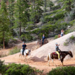 Horses on Peek A Boo Loop in Bryce Canyon National Park in Utah