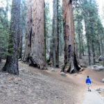 Congress Trail Sequoia NP California USA