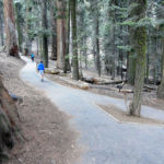 Easy walk on Congress Trail Sequoia NP California USA