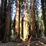 In front of The House Congress Trail Sequoia NP California USA