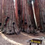 The House Congress Trail Sequoia NP California USA