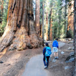 Walking on the Congress Trail in Sequoia NP California USA