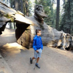 Walking under a fallen sequoia Congress Trail Sequoia NP California USA